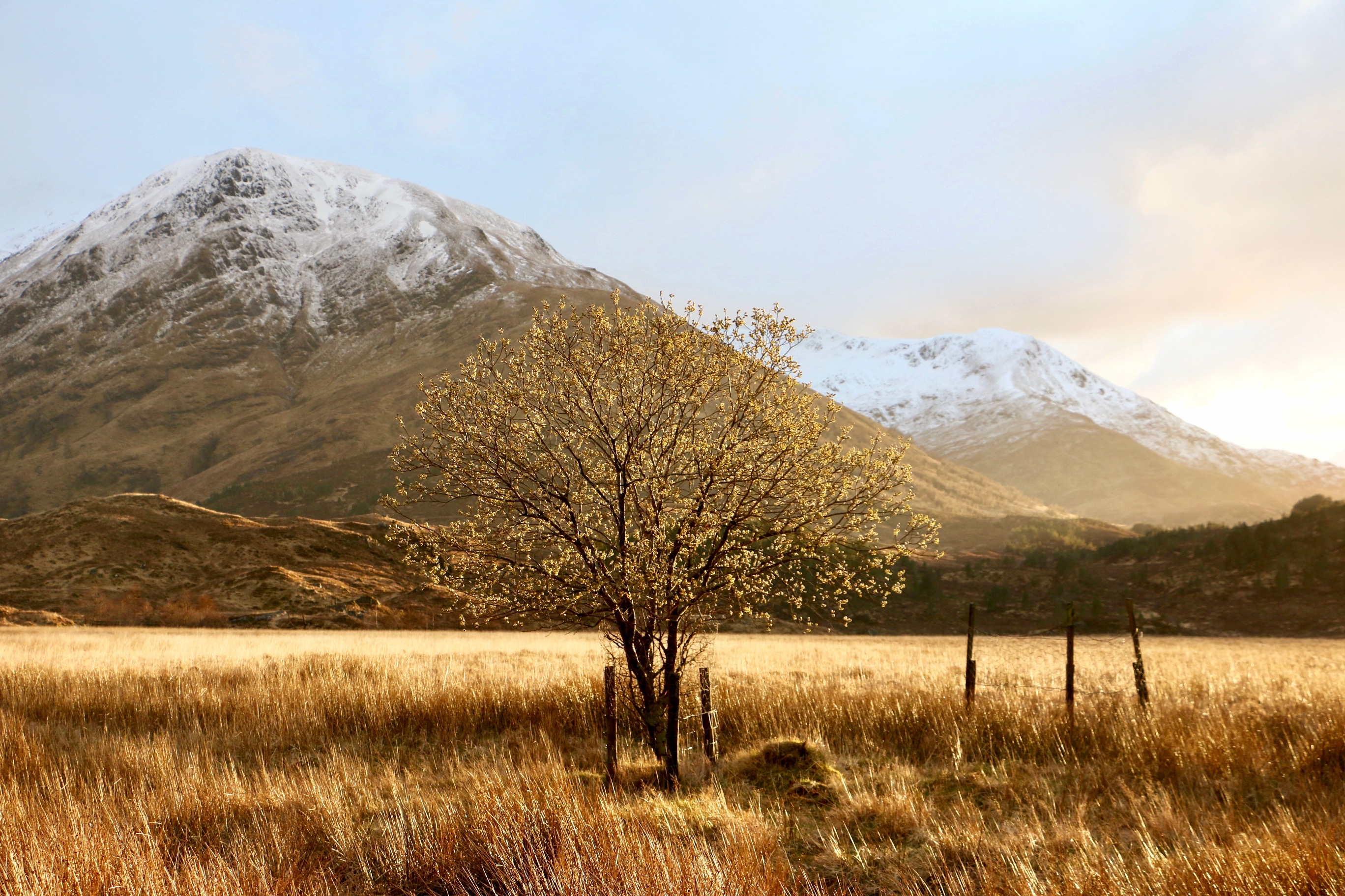 Picture of a tree in Glen Affric, where SHiFT's grove is being planted